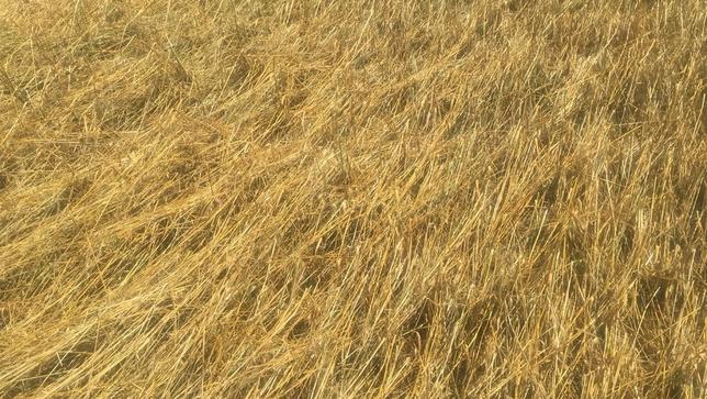 5.000 hectáreas pierden toda su producción por el granizo