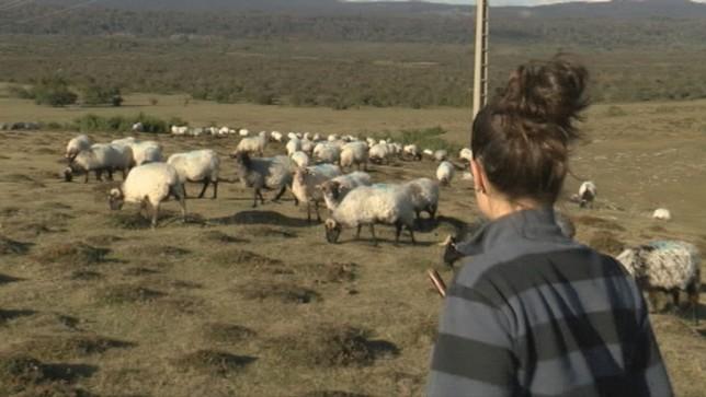 La pastora más joven de Navarra