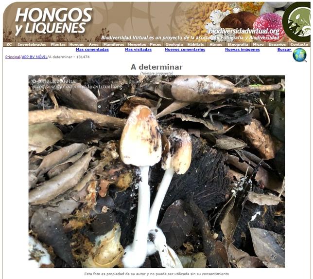 Una de las fotografías identificadas de Hongos