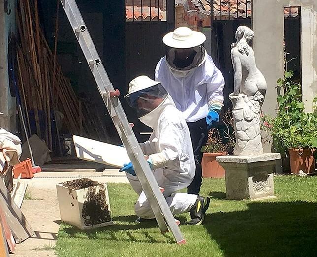 Las abejas colonizan la ciudad