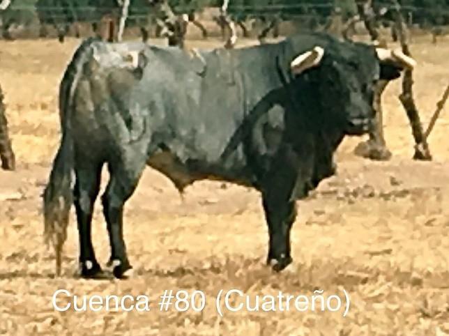 Los Santa Coloma de Pallarés para la feria taurina de Cuenca