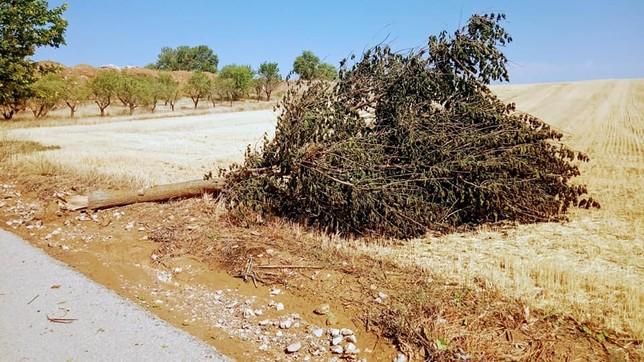 La tormenta de este martes causó varios destrozos en Cervera