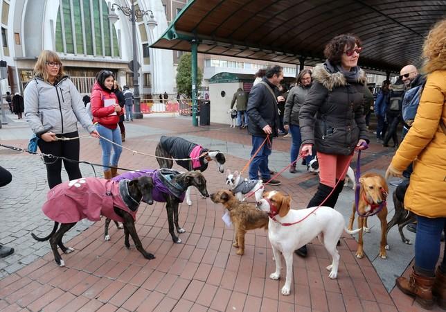 Animalistas exigen la prohibición de la caza con perro