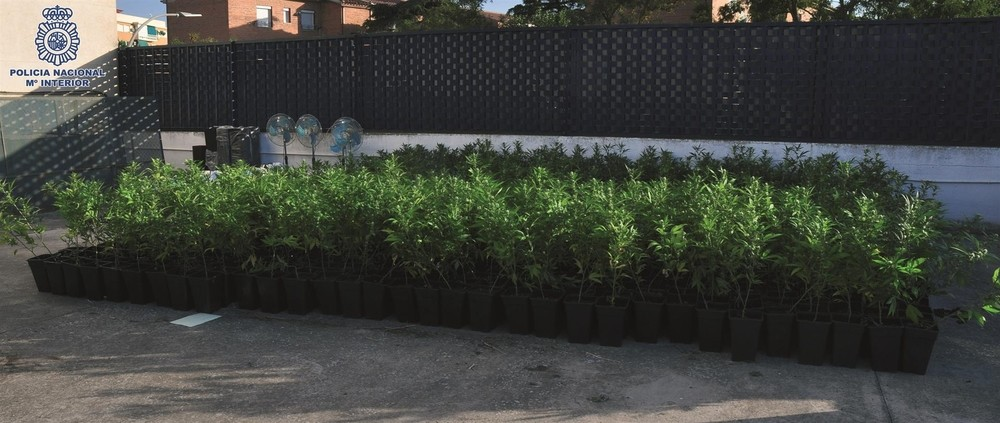 Más de 2.000 plantas de marihuana en chabolas de Ciudad Real