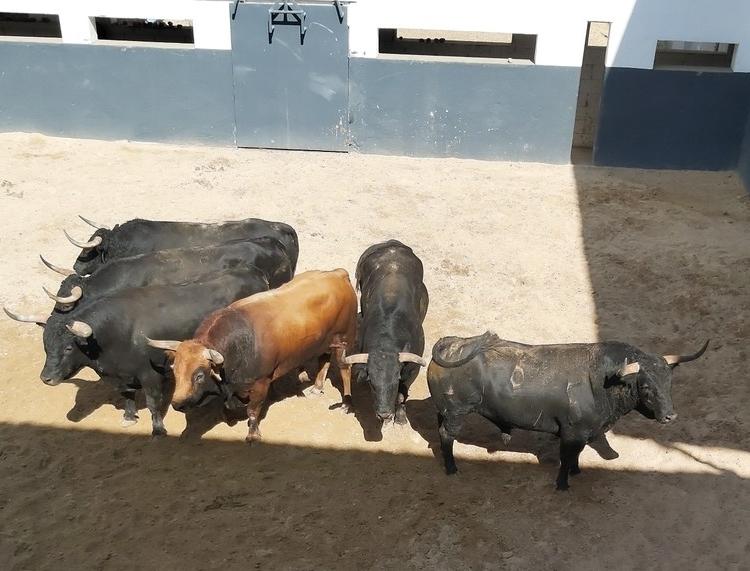 Enchiqueran una seria corrida de toros de Daniel Ruiz