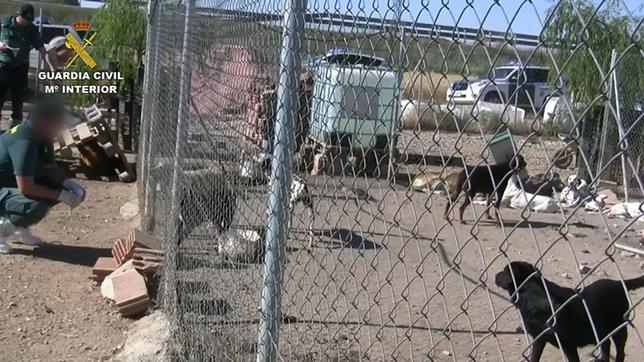 Exigen a la Junta que cierre el criadero de perros de Melgar