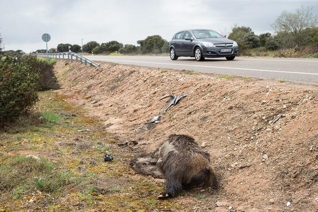 La fauna salvaje provoca 345 accidentes en lo que va de año
