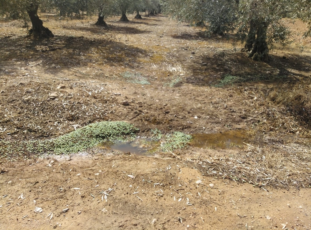 La gota fría deja muchos daños en Arroba de los Montes