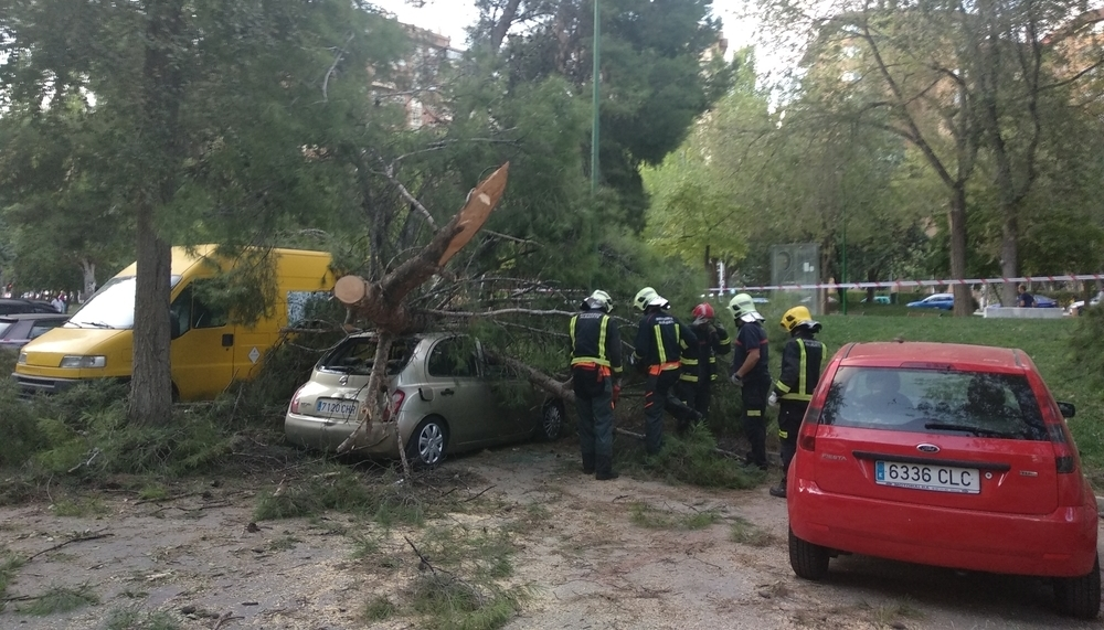 Daños en varios vehículos por la caída de un árbol