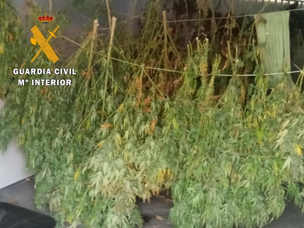 Intervenidos 13 kilos de marihuana en Fustiñana y Cortes