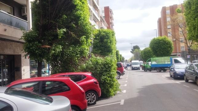 El viento derriba un árbol sobre dos coches