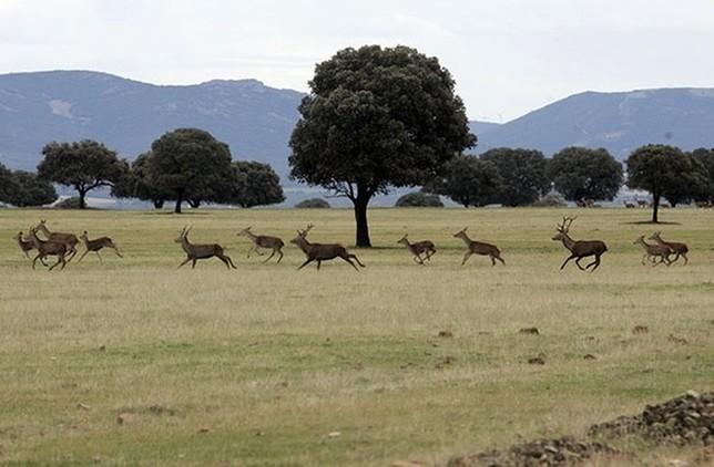 El PRUG prevé indemnizaciones por el fin de la caza en 2020