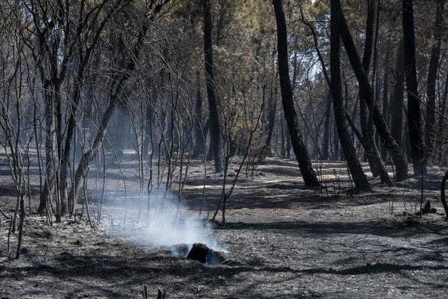 Incendio barchÁn del hoyo, incendio forestal,