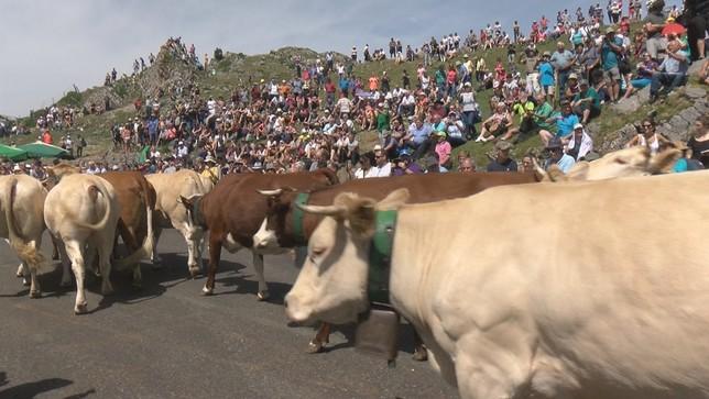 Navarra renueva en el Valle de Roncal un tributo milenario NATV