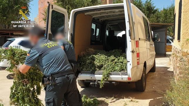 Intervienen una tonelada de marihuana en varias fincas