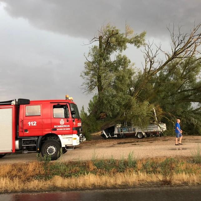 Los Bomberos de Aranda acudieron al aviso de la caída de un árbol por las tormentas