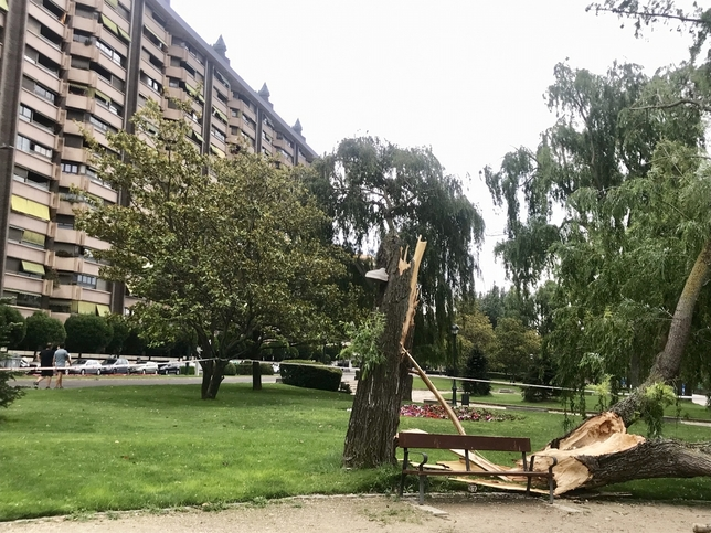 Árbol derribado por el viento en Isabel la Católica. Ical