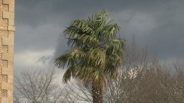 Riesgo en Navarra por la llegada de fuertes vientos