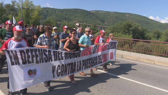 Ganaderos alzan la voz contra el oso y el lobo en el Pirineo