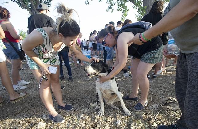Decenas de voluntarios se ofrecieron a atender a los perros desalojados de la perrera municipal gestionada por la asociación San Bernardo.