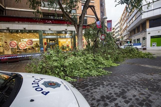 Caídas de ramas en el Pilar y de un árbol en el Prado