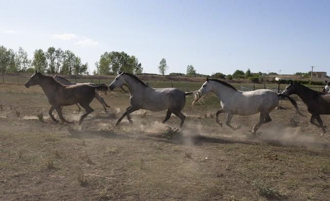 El negocio  equino: una pasión