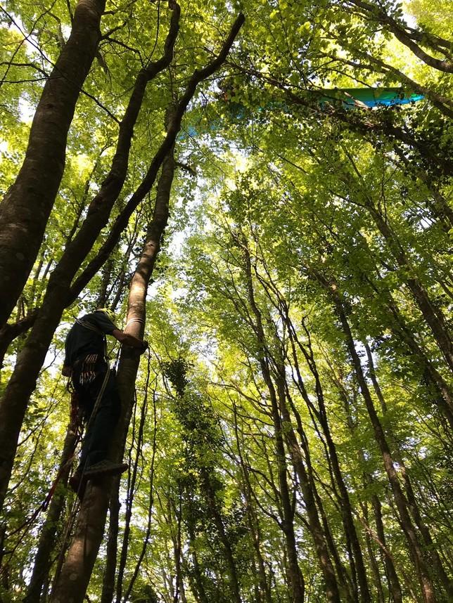 Una mujer queda colgada de un árbol practicando ala delta