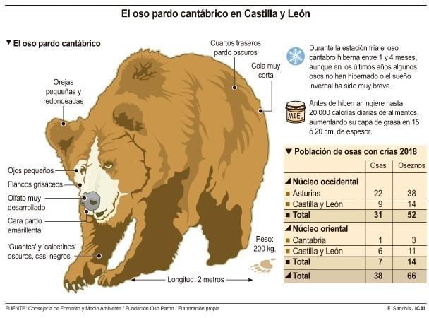 Distribución de la población de osos pardos en la Cordillera Cantábrica según el censo de 2018