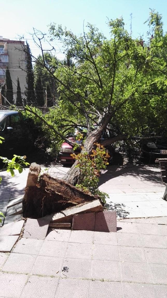 Las rachas de viento provocan la caída de varios árboles @BomberosVLL