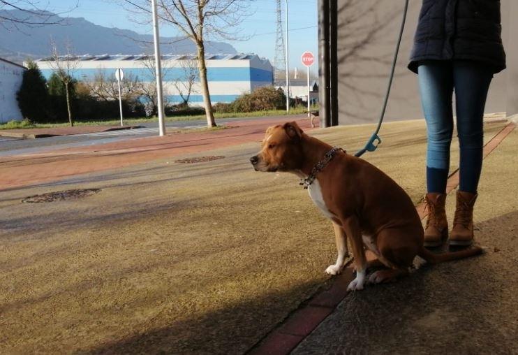 Consiguen rescatar a un perro de un incendio en Irurtzun