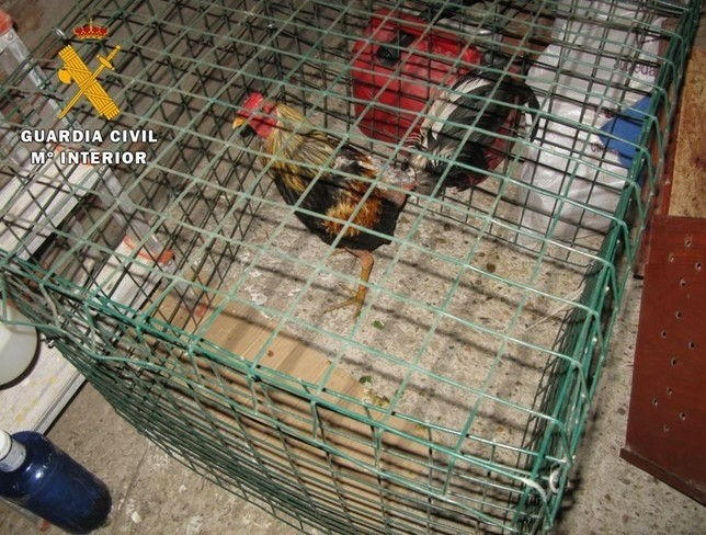 Trece detenidos en una pelea de gallos en la localidad vallisoletana de Tordesillas.