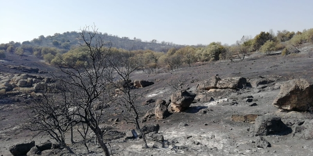 El incendio que afectó a Montesión se encuentra perimetrado