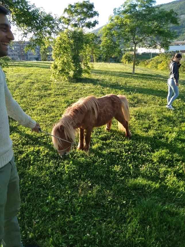 Un pony pasea a sus anchas por las calles de Pamplona