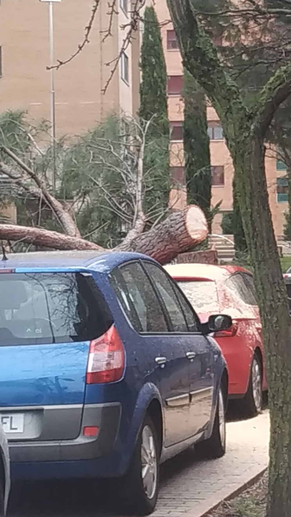 El viento derriba árboles y un reguero de intervenciones