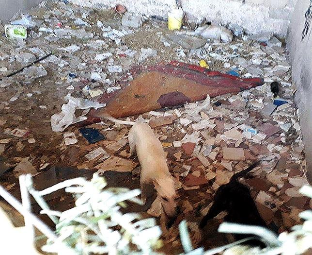 Interior del habitáculo en el que estaban varios animales, lleno de cristales, excrementos y basura. @PROANBUR