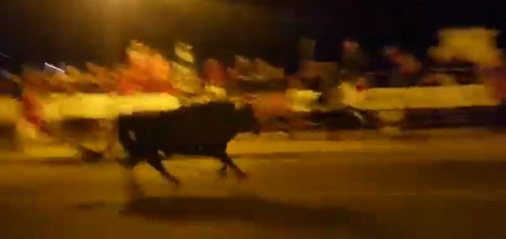 Emocionante desenjaule nocturno del Toro de la Vega