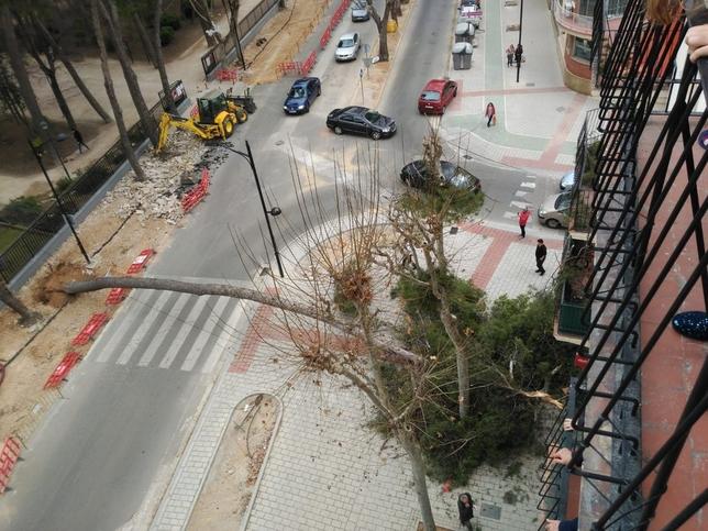Cae un árbol en el Paseo Simón Abril Twitter Bomberos Albacete
