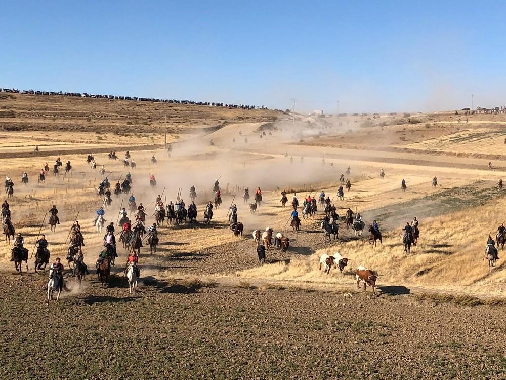 Imagen del traslado de las reses por el campo