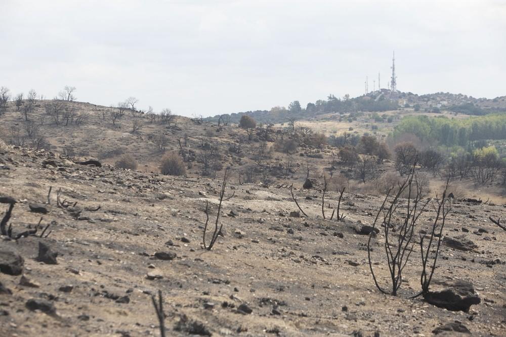 El fuego desvastó 1.227 hectáreas de monte mediterráneo.