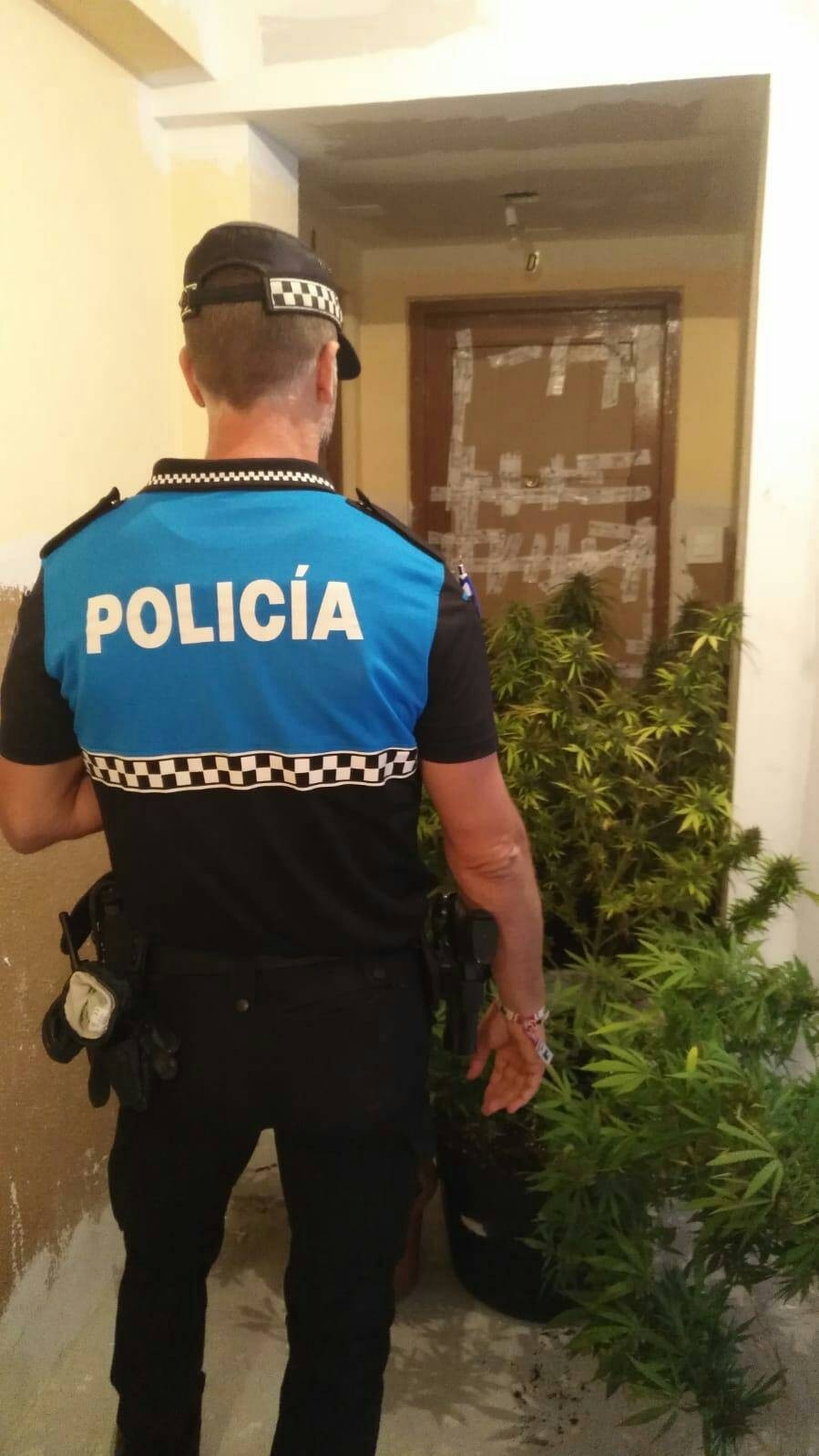Intervenidas 6 plantas de marihuana en un piso de Delicias