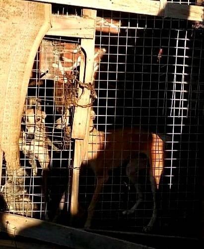 Rescatan a 4 galgos encerrados en una caseta de Las Flores