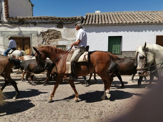 Imagen de la 'I Trashumancia, Camino Real de Sevilla' en Orgaz.