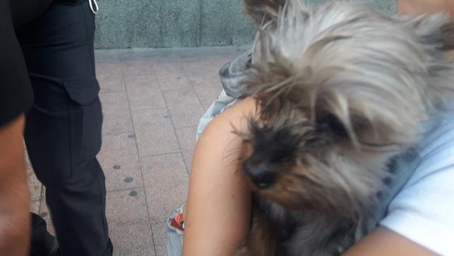 Rescatados dos perros de un incendio en General Shelly