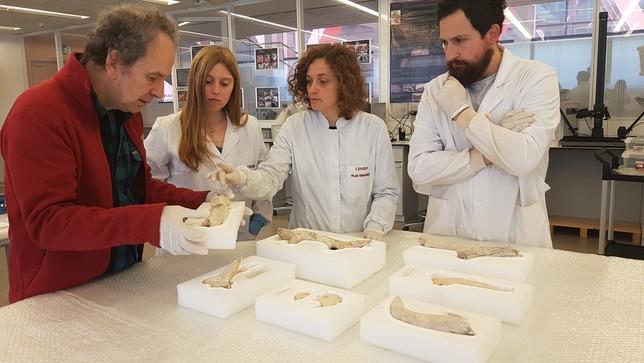 Restauran las herramientas de asta más antiguas de Iberia