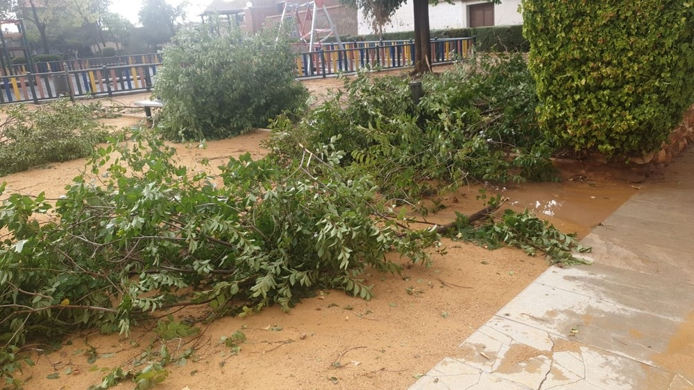 El viento provoca la caída de árboles y ramas en Valdepeñas