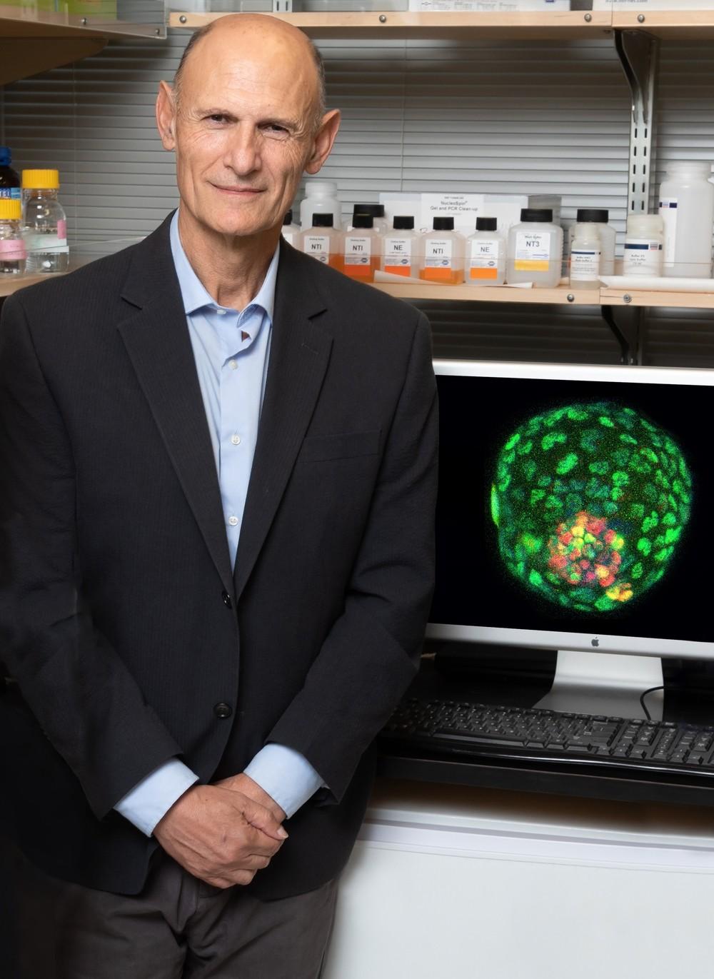 Embriones sintéticos para entender el comienzo de la vida