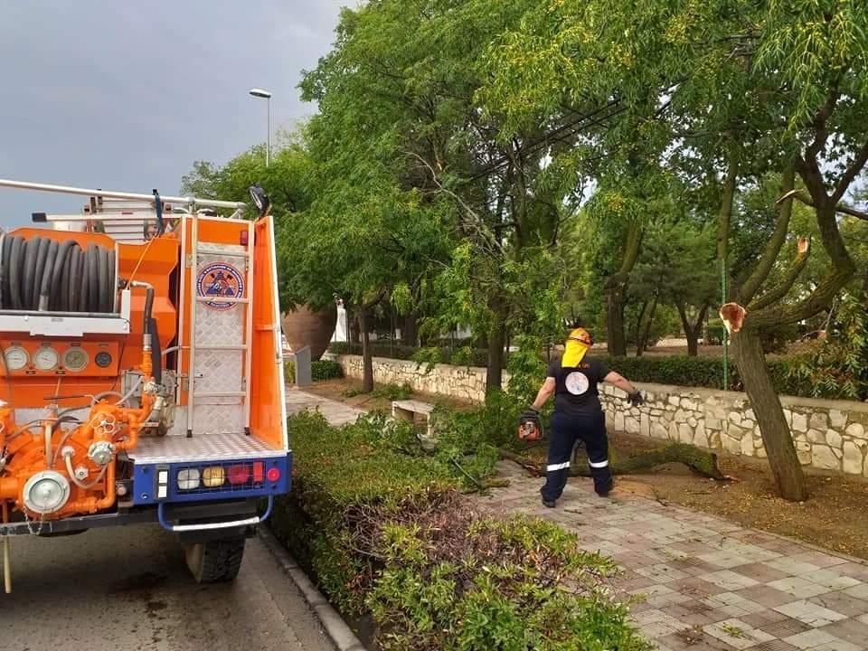 El viento provoca la caída de varios árboles en Valdepeñas