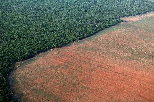 Un millón de especies, amenazadas de extinción en el mundo
