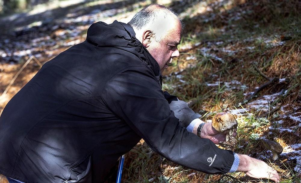 El presidente de la Sociedad Micológica Segoviana, Ramón Saiz, examina un ejemplar.
