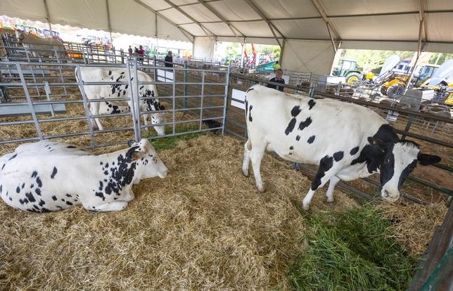 Fuente el Fresno, epicentro de la agricultura y la ganadería